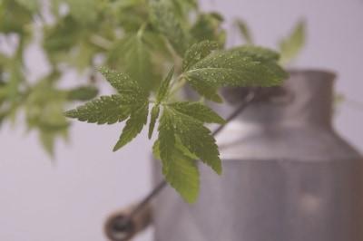 pot-cannabis-fleurs-cbd-graines-fibres-french-hemp-factory-2020