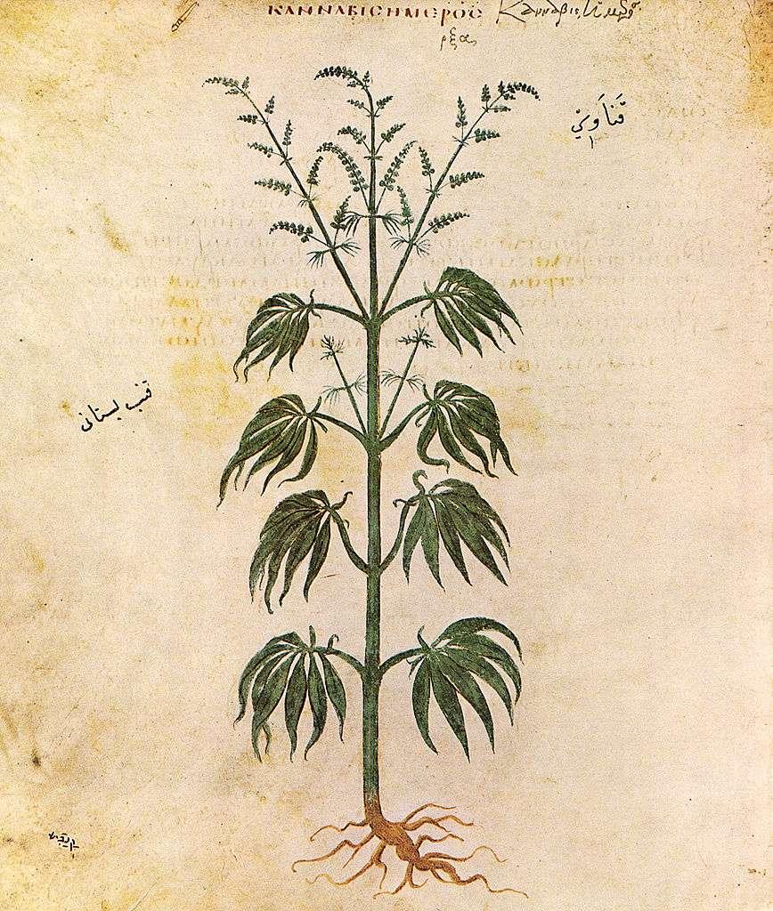 Cannabis-cbd-lafrench-2021